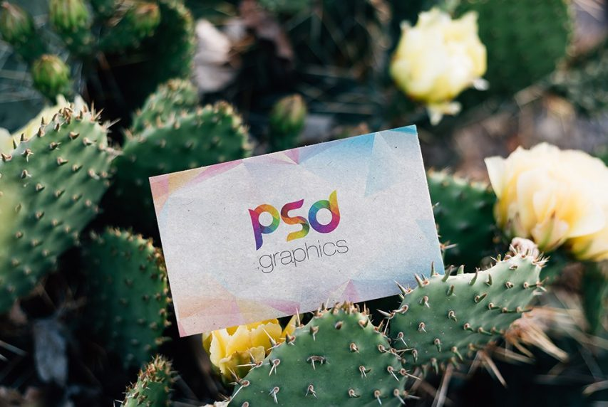 Free Outdoor Business Card Mockup